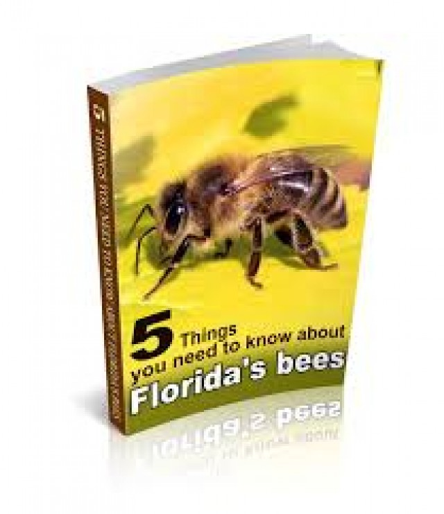 Cost-Effective Bee Removal Service In Miami