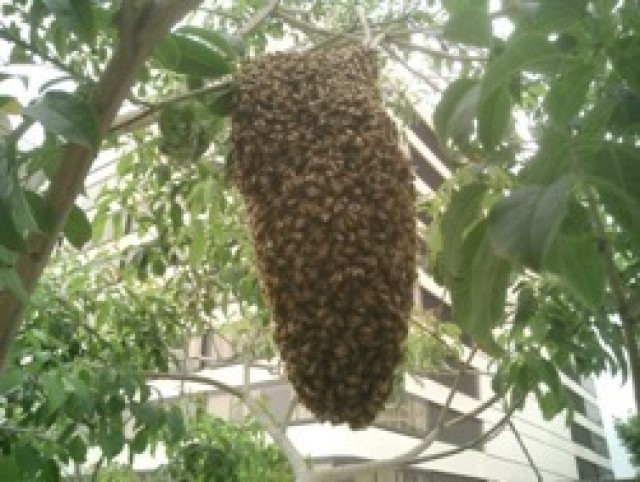 Bee Removal Houston | Budget Bee Control